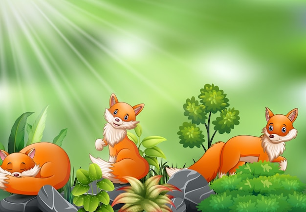 Nature scene with group of fox cartoon