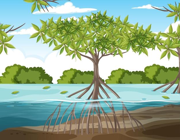맹그로브 숲과 물 속에 맹그로브 나무의 뿌리가 있는 자연 장면