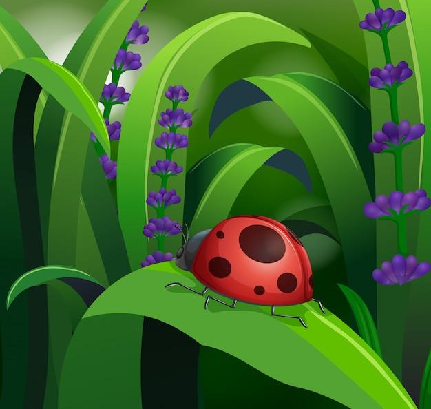 葉に赤いてんとう虫と自然シーン