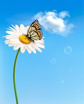 Природа весенний цветок ромашки с бабочкой