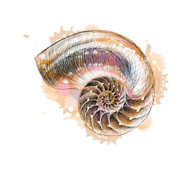 Nautilus shell section from a splash of watercolor, hand drawn sketch.  illustration of paints