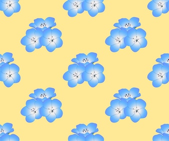 Nemophila Baby Blue Eyes Flower on Yellow Background