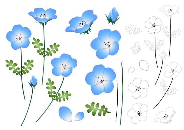 Nemophila baby blue eyes flower outline