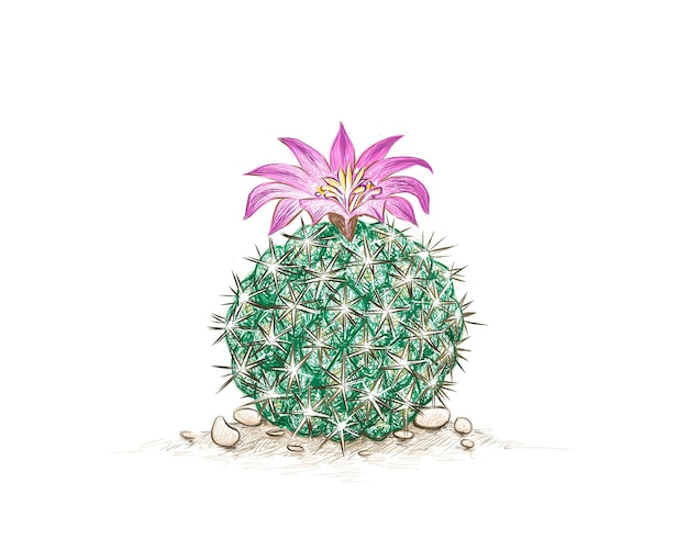 Neolloydia cactus with pink flower a succulent plants with sharp thorns for garden decoration