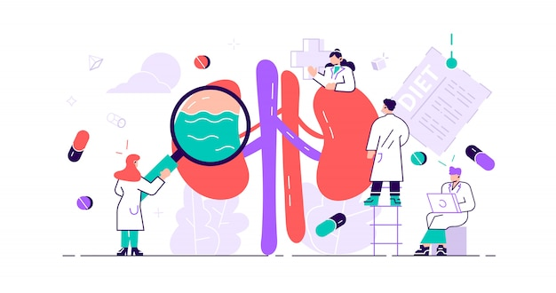 Концепция нефрологии. абстрактная анатомо-медицинская болезнь внутренних органов
