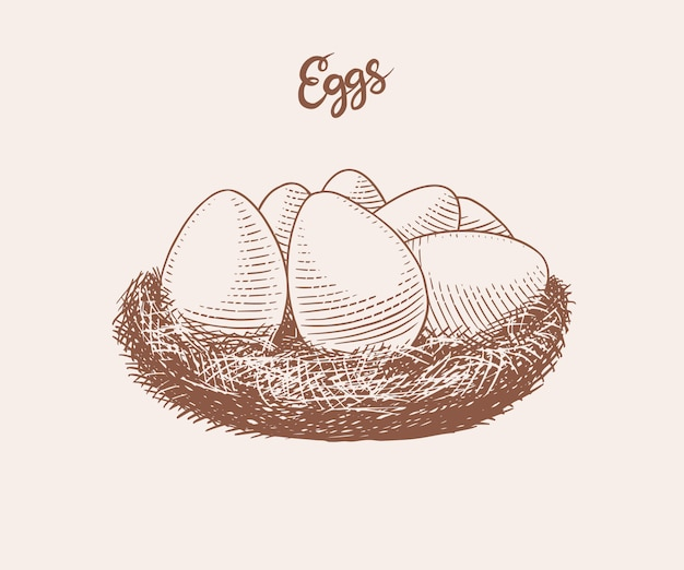 Nest of eggs. farm product. engraved hand drawn retro vintage sketch. woodcut style.  illustration for menu or poster or easter.