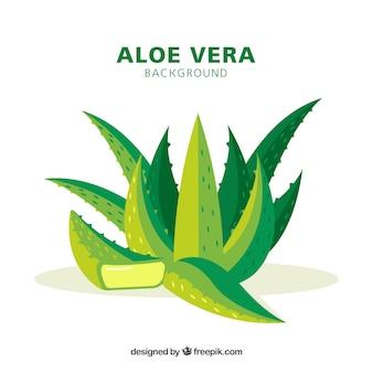 Nice background of aloe vera