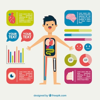 Nice infographic of the human body in flat design