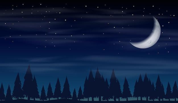 森の中の夜