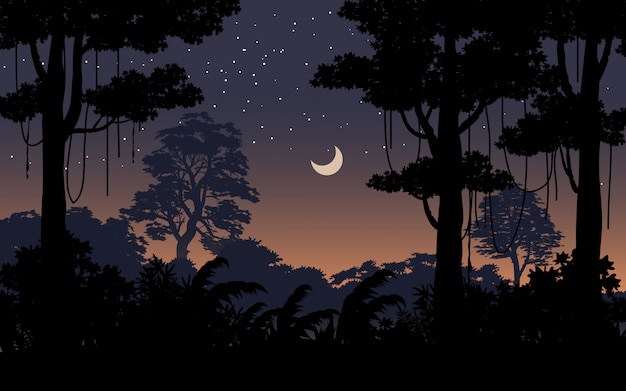 Night time in tropical forest landscape