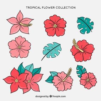 Nove fiori e foglie tropicali disegnati a mano