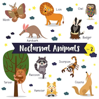 Nocturnal animal cartoon with animal name