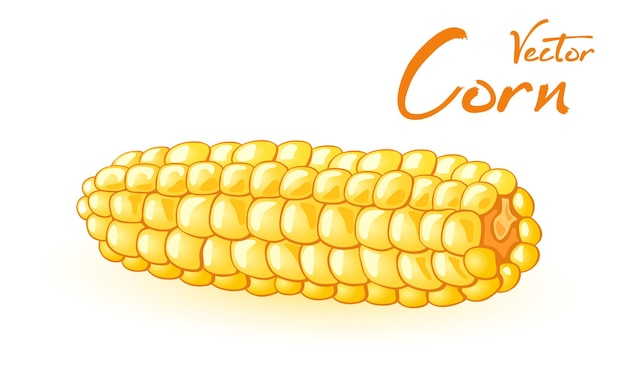 Noggin of mellow maize, agriculture and vegetarianism, juicy vegetable.