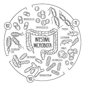 Normal opportunistic pathogenic gut microbiota of the digestive tract human intestinal flora