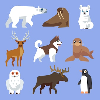 North arctic or antarctic animals and birds