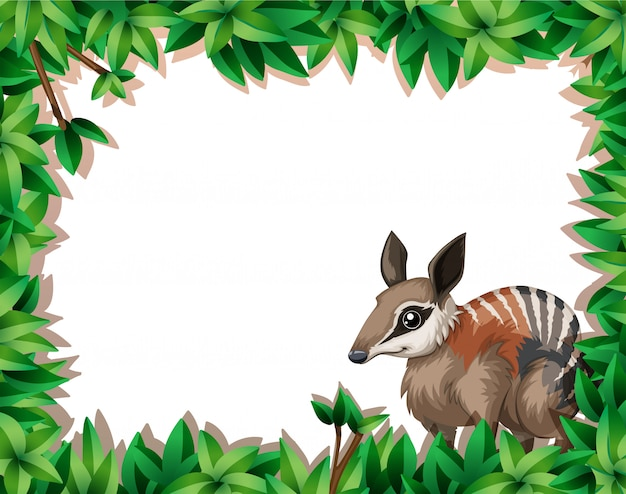 A numbat on nature frame