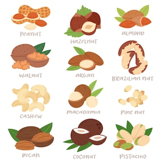 Ореховая скорлупа фундука или грецкого ореха и миндаля установила питание с иллюстрацией арахиса кешью и каштана на белом фоне