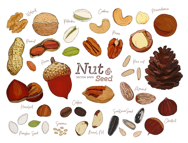 Nut and seed collection hand draw sketch vector.