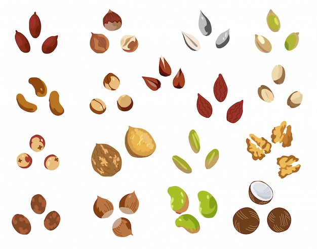 Nut set. cartoon set of nut vector elements