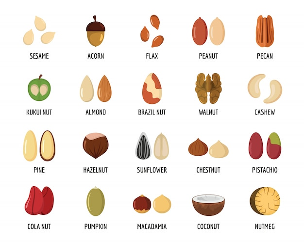 Nut types with signed names icons set