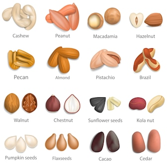 Nut types with signed names mockup set. realistic illustration of 16 nut types with signed names mockups for web