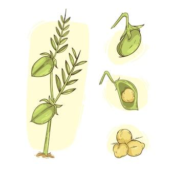 栄養のあるひよこ豆と植物