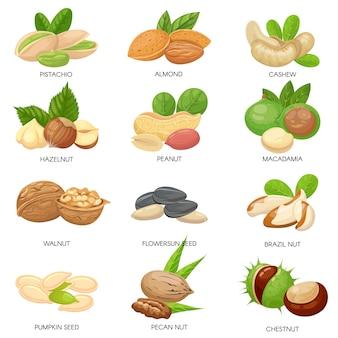 견과류와 씨앗. 생 땅콩, 마카다미아 너트 및 피스타치오 스낵. 식물 씨앗, 건강 한 캐슈 및 해바라기 씨 격리 설정