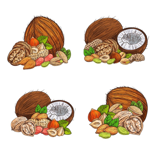 Изолированная иллюстрация эскиза орехов и семян