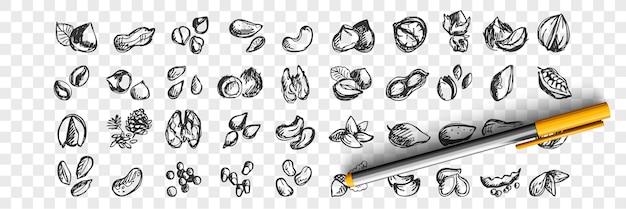 Набор орехов каракули. коллекция рисованной эскизов шаблоны шаблонов миндаля, кешью, макадамии, арахиса, кедра, фисташек, фундука, грецких орехов, семян на прозрачном фоне. иллюстрация натуральных продуктов питания.