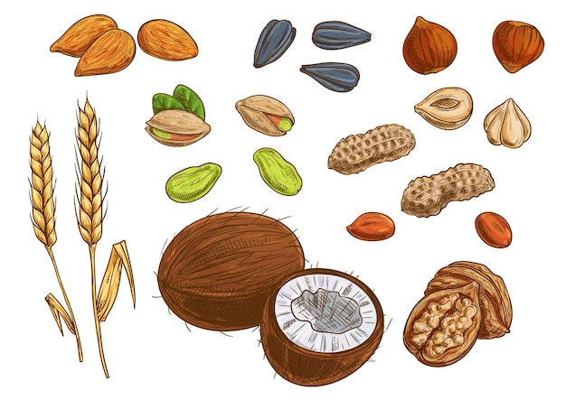 Орехи, зерно и ядра. пшеница, миндаль, фисташки, кокос, семечки, арахис, лесной орех, грецкий орех