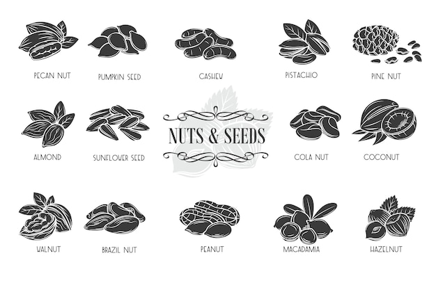 Nuts and seeds glyph icons. cola nut, pumpkin seed, peanut and sunflower seeds.