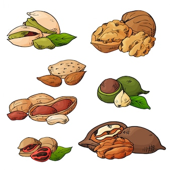 Nuts and seeds vector collection.