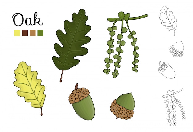 分離されたoの木の要素のベクトルを設定します。オークの葉、ブランチ、花、ドングリ、amentの植物図。黒と白のクリップアート。