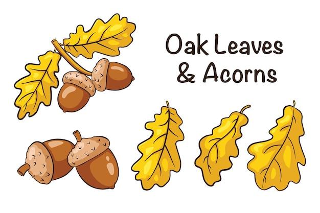 オークの葉とどんぐりのセット。手描きのオークの果実と葉のコレクション。秋の装飾的な要素。ロゴ、メニュー、プリント、ステッカー、デザイン、装飾のベクトルイラスト。プレミアムベクトル