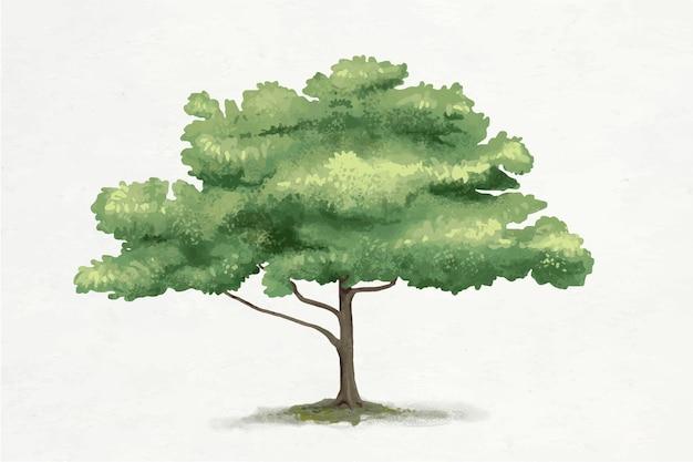 Oak tree element graphic