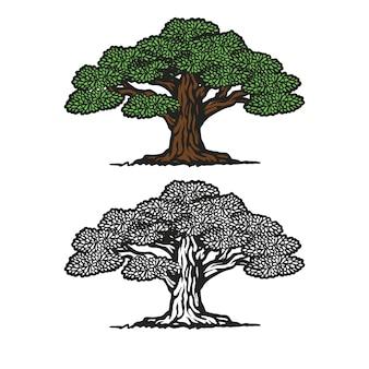 樫の木のシルエットイラスト