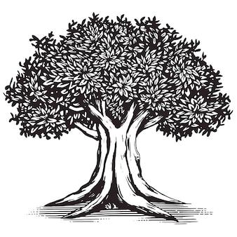 Дуб дерево векторных логотипов иллюстрации дизайн