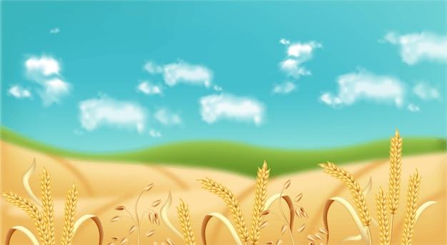 Oat fields realistic background