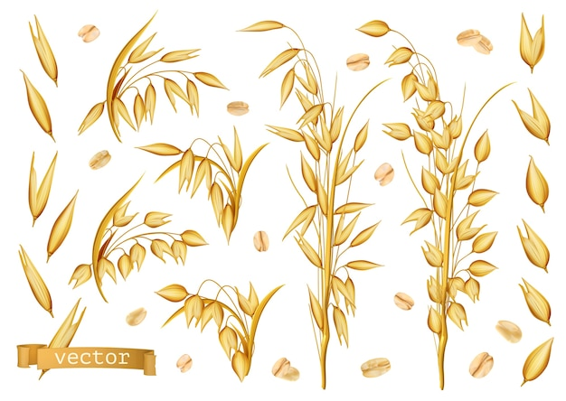 Oat plants, rolled oats icon set