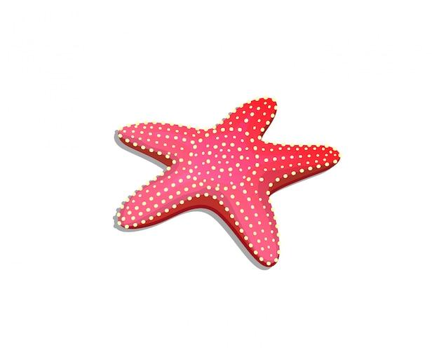 Океан изолированных беспозвоночных дикой природы морская звезда рисованной подробные иллюстрации для детей.