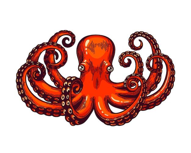 Осьминог гравюра. старинные цвета высота подробно гравировка цветная иллюстрация. карта в стиле ретро. красный осьминог на белом фоне.