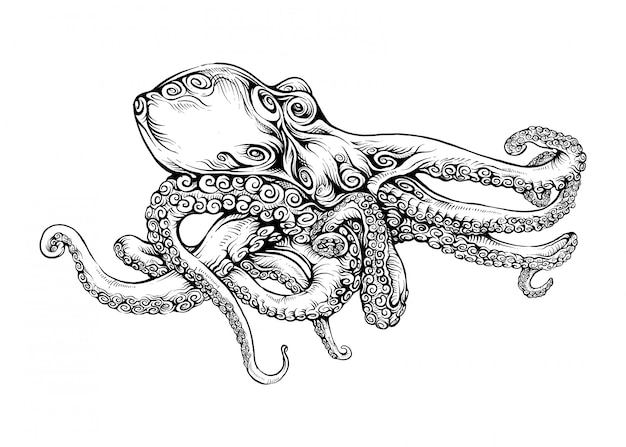 Octopus  in hand drawing