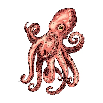 Octopus hand drawn illustration