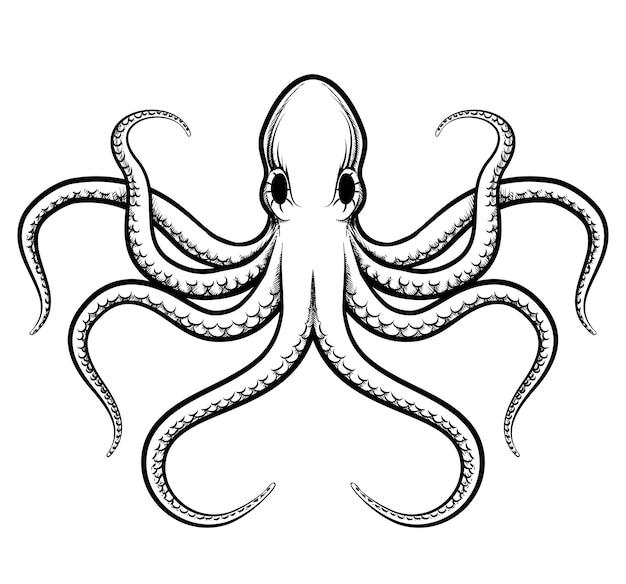 Осьминог иллюстрации. красиво окрашенные черные линии осьминога на белом фоне