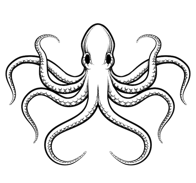 Octopus illustration. beautifully painted octopus black lines on a white background