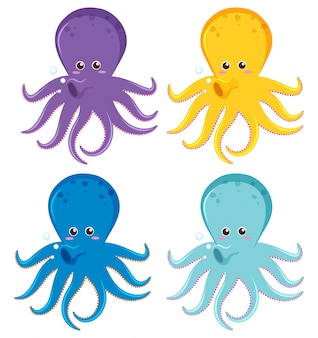 Octopus in four different colors