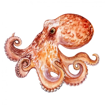 Octopus isolated. watercolor. illustration