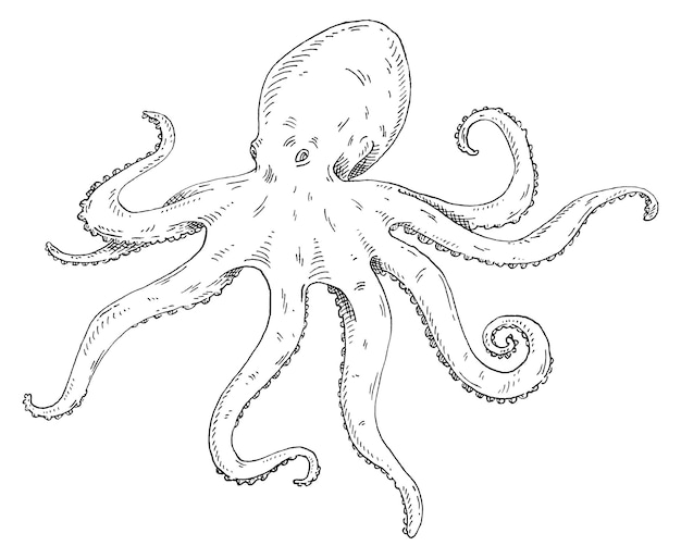 Octopus isolated on white vintage vector hatching monochrome black illustration