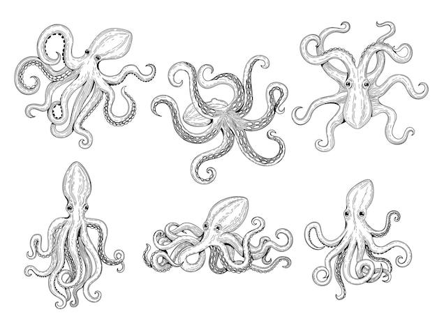 たこ。海の魚の大きな水中モンスター野生イカ手描きの海洋タトゥーテンプレート。