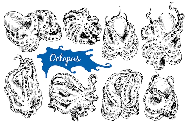 Octopus in sketch style